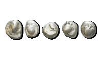 Europas eldste mynter - skilpaddestater