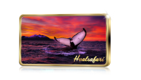 Norges flotteste attraksjoner Hvalsafari